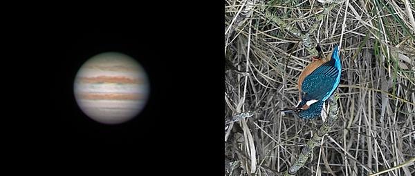 Ein Blick durch ein Newtonteleskop: Ob Jupiter auf dem Kopf steht, ist nicht so wichtig. Der arme Eisvogel weiß so aber nicht mehr, wo ihm der Kopf steht